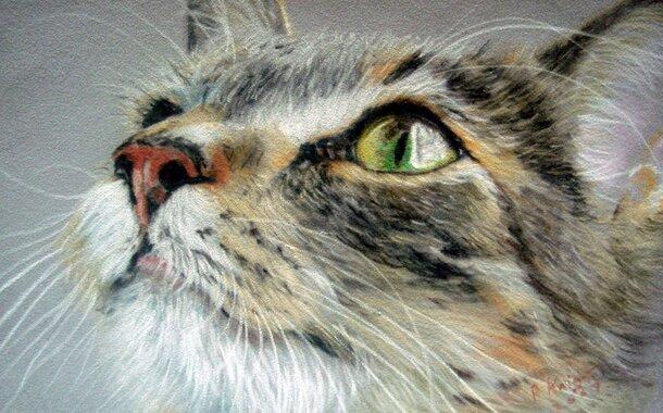 Odpolední kurz kresby a malby pro začátečníky
